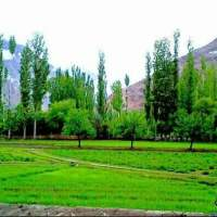 Escape to Yasin Valley to shed your stress away
